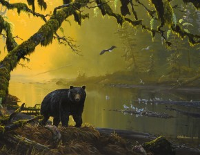 Black Bear: Tranquil River
