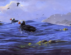 Tufted Puffins: Riding Pacific Swell