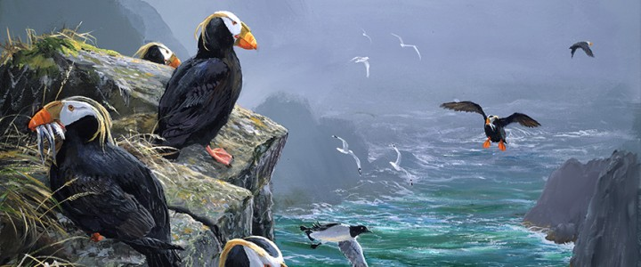 Tufted Puffins: Arrivals Lounge, Coronation Island, Alaska - Giclees - Artwork Reproductions - Giclees, Paper Prints, Prints and Gift Store