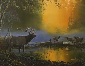 Roosevelt Elk: Wake Up Call