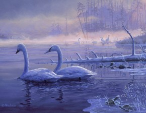 Trumpeter Swans: Winter Solitude