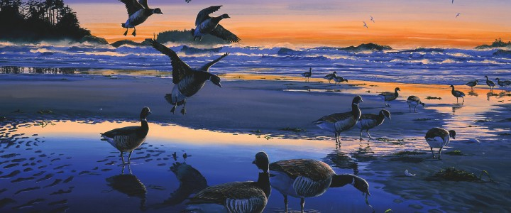 Black Brant Geese: Evening Stopover - Prints & Art Cards - Artwork Reproductions - Giclees, Paper Prints, Prints and Gift Store
