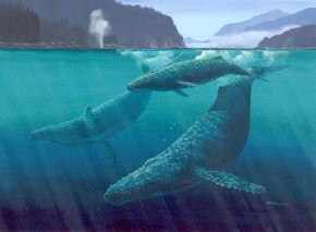 Humpbacks: Soaring Through Green Water
