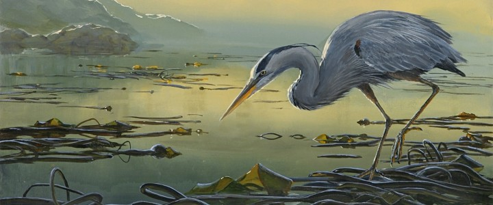 great blue heron: a delicate balance,art cards