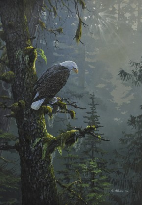 Bald Eagle: Morning Catch