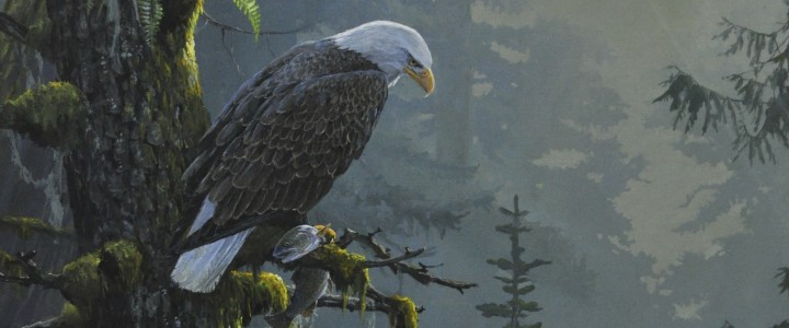 Bald Eagle: Morning Catch - Art Cards & Blockmounts - Artwork Reproductions - Giclees, Paper Prints, Prints and Gift Store