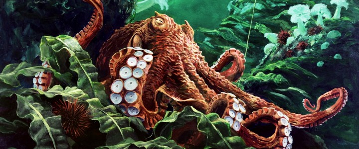 Octopus: Going With The Flow - Art Cards & Blockmounts - Artwork Reproductions - Giclees, Paper Prints, Prints and Gift Store