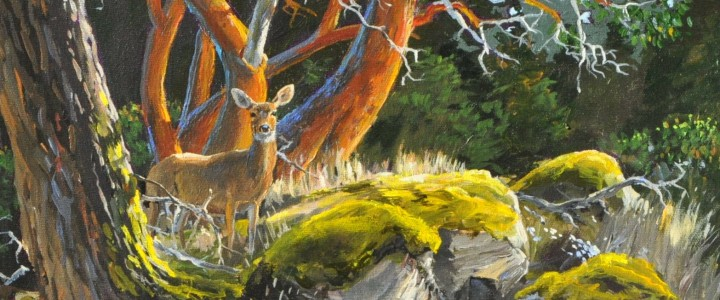 Blacktail Deer: Samuel Island - Acrylics & Oils - Original Artwork - Acrylics, Oils & Watercolours