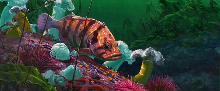 tiger rockfish,giclees, tiger rock fish, underwater, giclée, giclee, artwork, 2006, tofino, ucluelet, west coast, vancouver island, british columbia, b.c.,